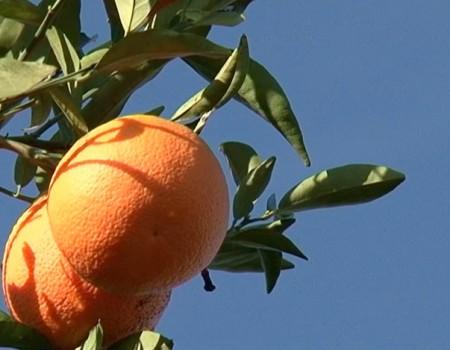 Jus d'orange Espagne